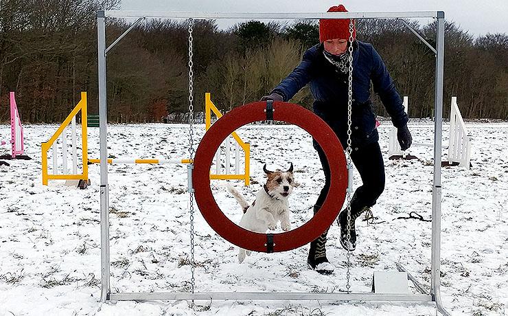 Lokale hunde på spring og øvelser
