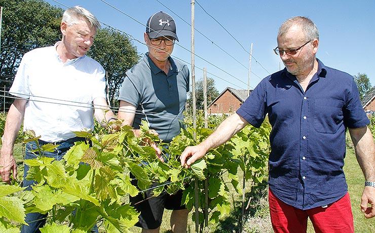 Vinbønder i Vokslev på vej med første produktion