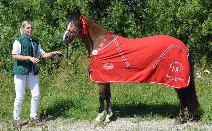Ponyer tog førstepladser på hjemmebanen