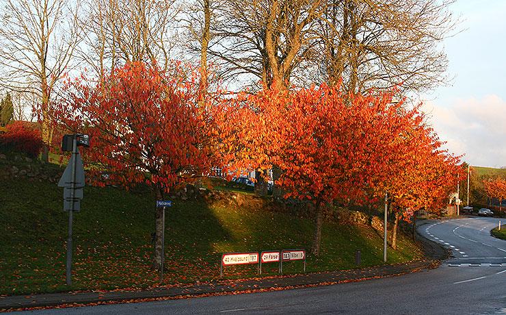 De fire årstider – efteråret