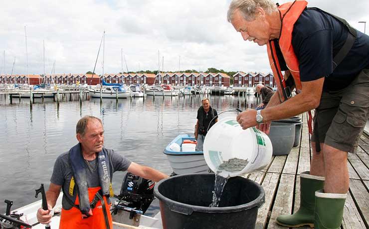 Fritidsfiskeriet i fremgang trods udfordringer framyndigheder, sæl og skarv